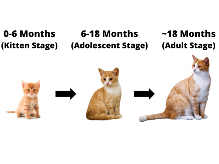 whats the common consequence because of a 2 period age cat