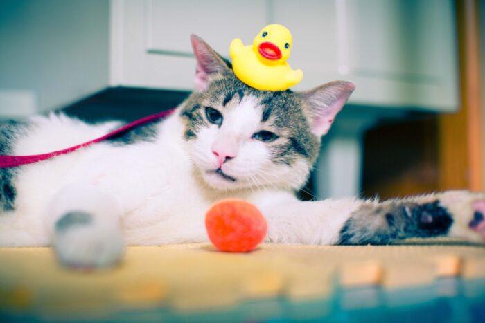 How Often Can I Give My Kitten A Flea Bath Kittyexpert Com