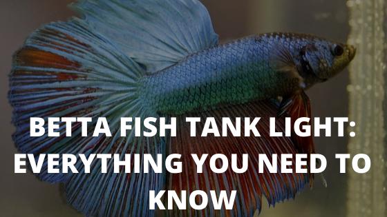 Betta Fish Tank Light